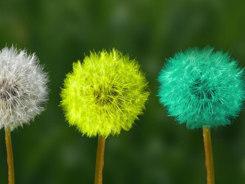 Tres flores de colores que al soplar se deshacen.