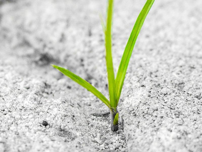 Planta creciendo entre el cemento de una acera.