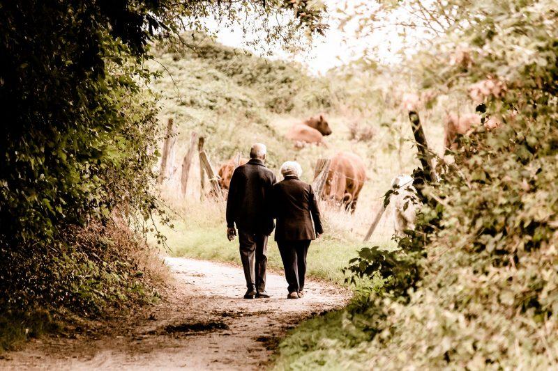 Dos personas mayores pasean juntas por un camino campestre, junto a unas vacas que pastan.